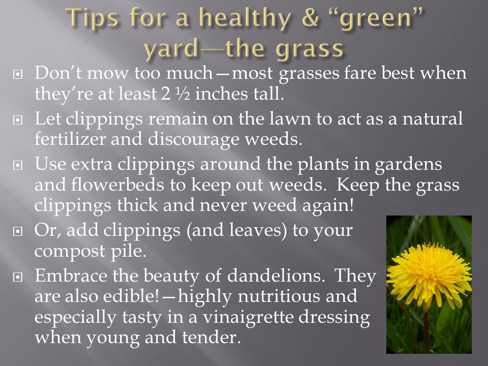 Tips for a healthy & green yard—the grass