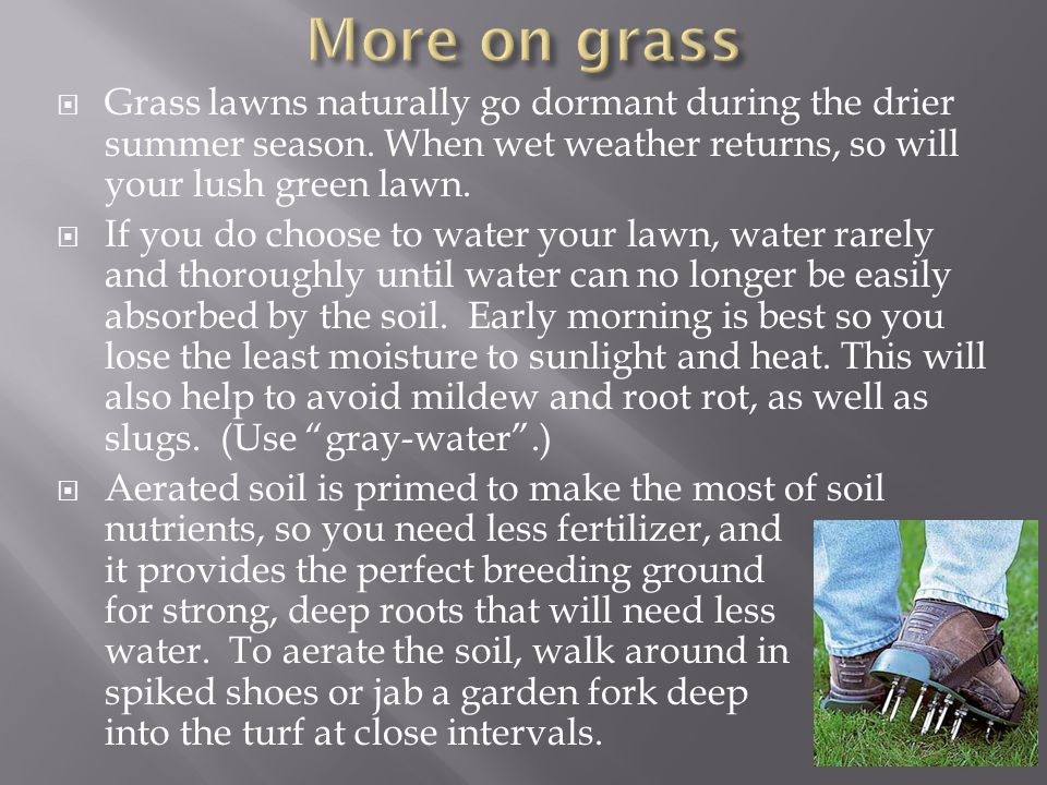 More on grass Grass lawns naturally go dormant during the drier summer season. When wet weather returns, so will your lush green lawn.