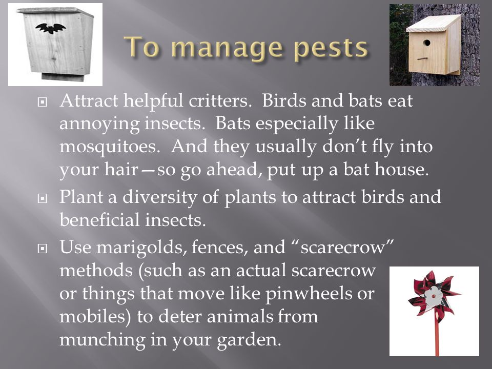 To manage pests