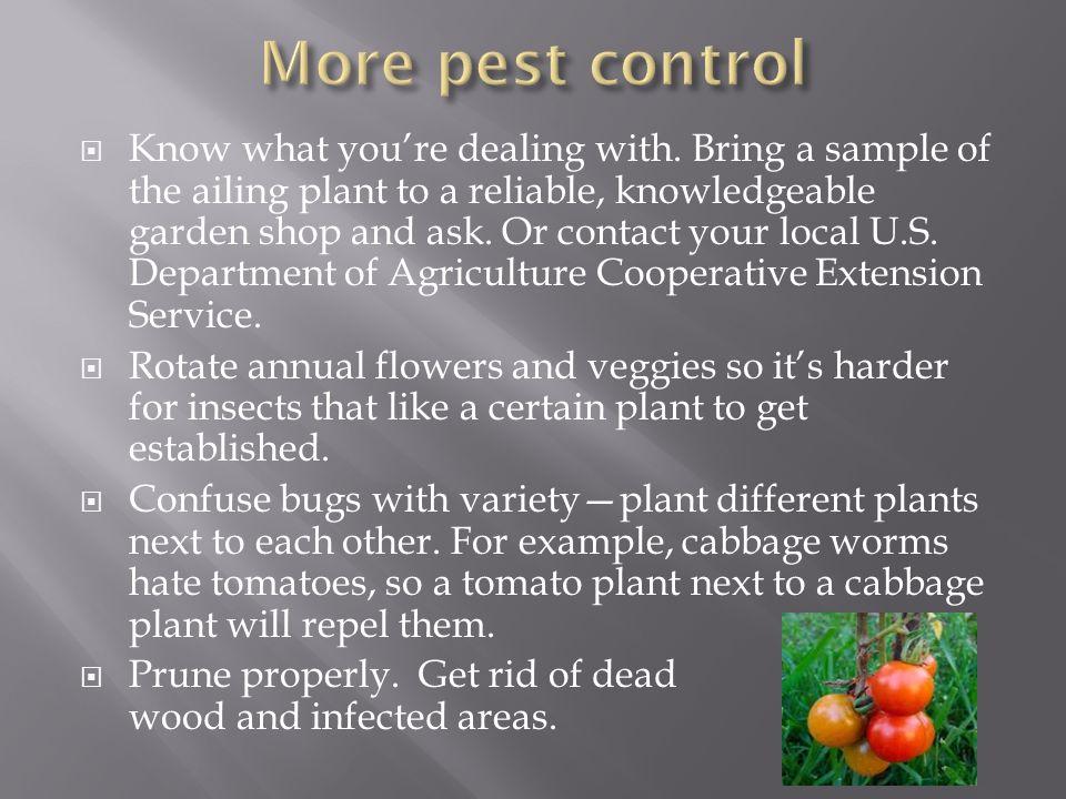 More pest control