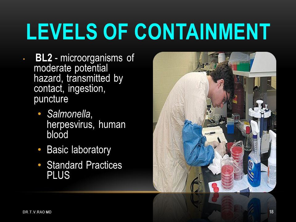 Levels of Containment Salmonella, herpesvirus, human blood
