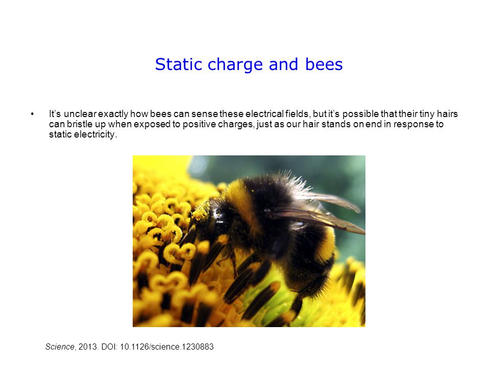 Static charge and bees