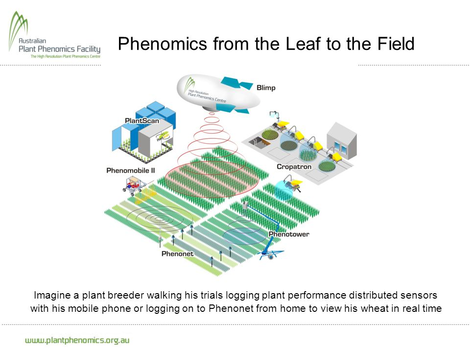 Phenomics from the Leaf to the Field