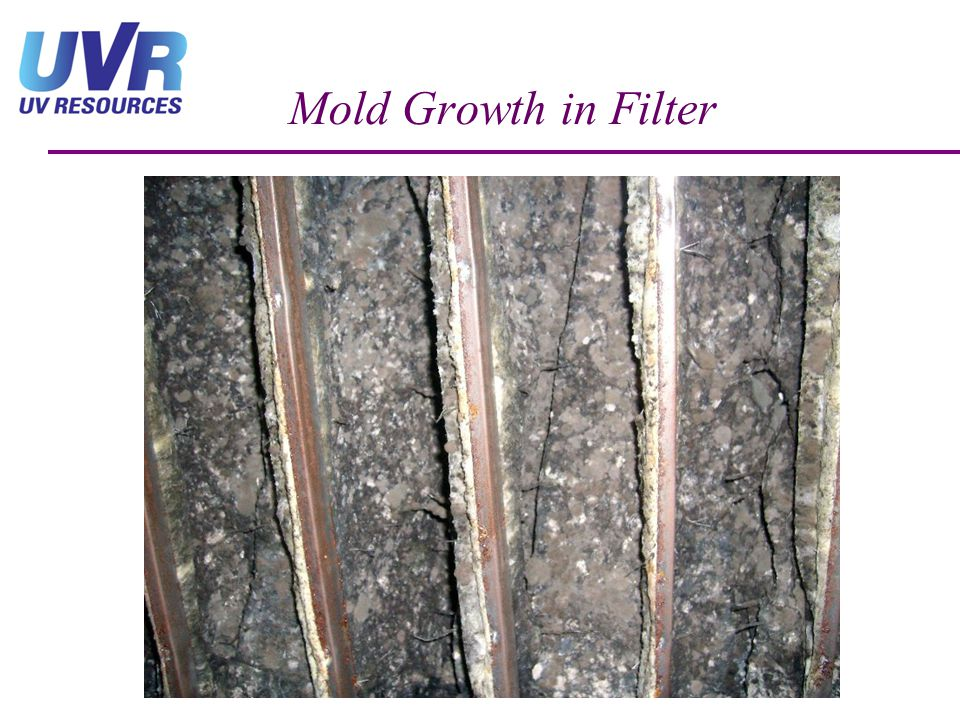 Mold Growth in Filter