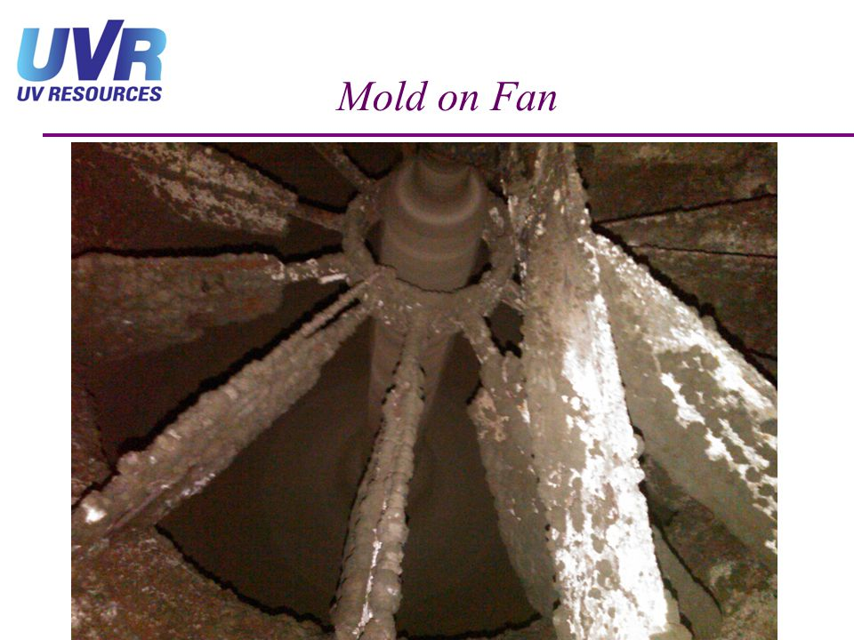 Mold on Fan