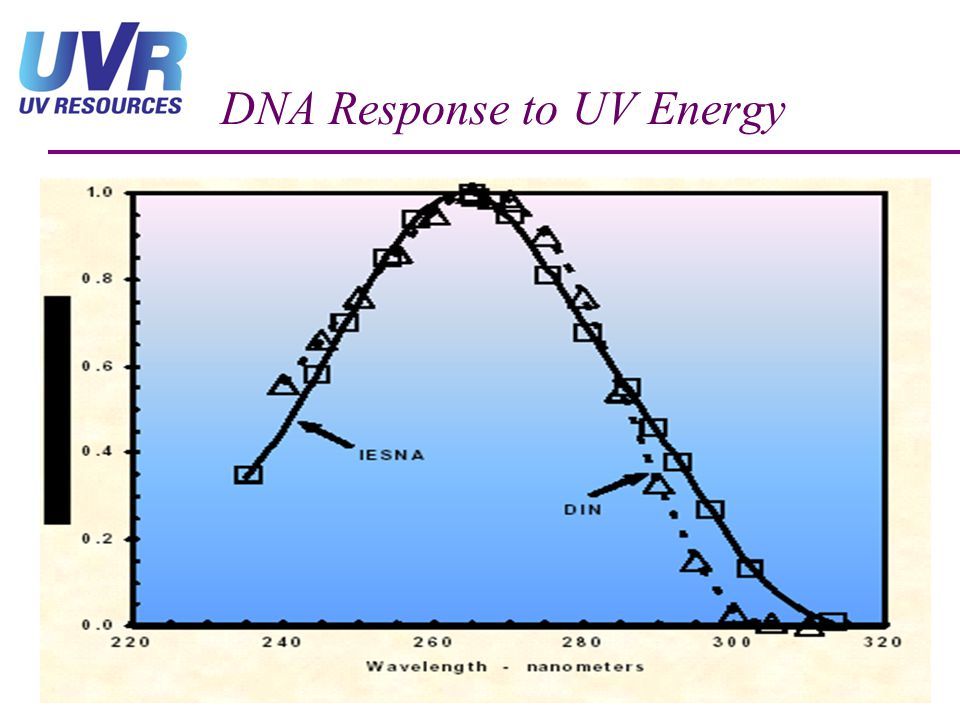 DNA Response to UV Energy