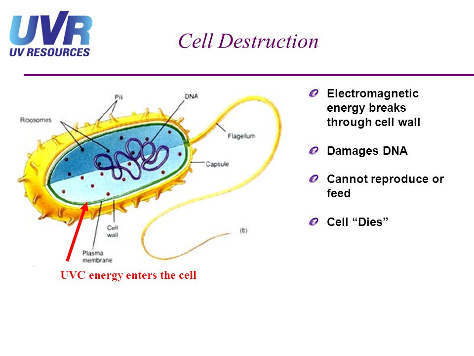 Cell Destruction Electromagnetic energy breaks through cell wall