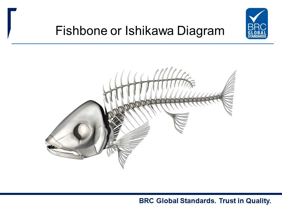 Fishbone or Ishikawa Diagram