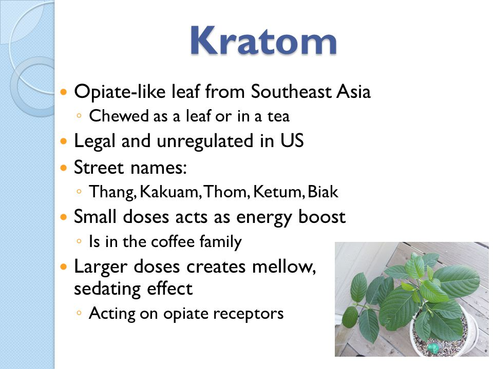 Kratom Opiate-like leaf from Southeast Asia