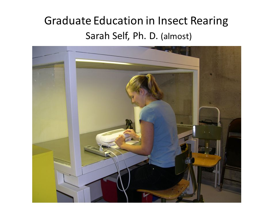 Graduate Education in Insect Rearing