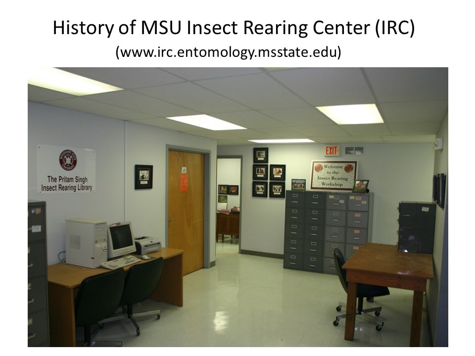 History of MSU Insect Rearing Center (IRC) (www. irc. entomology