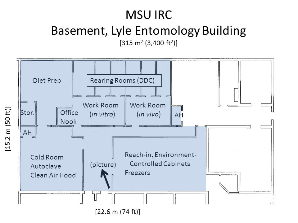 Basement, Lyle Entomology Building