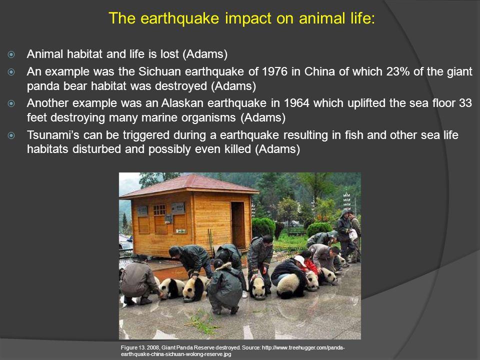 The earthquake impact on animal life: