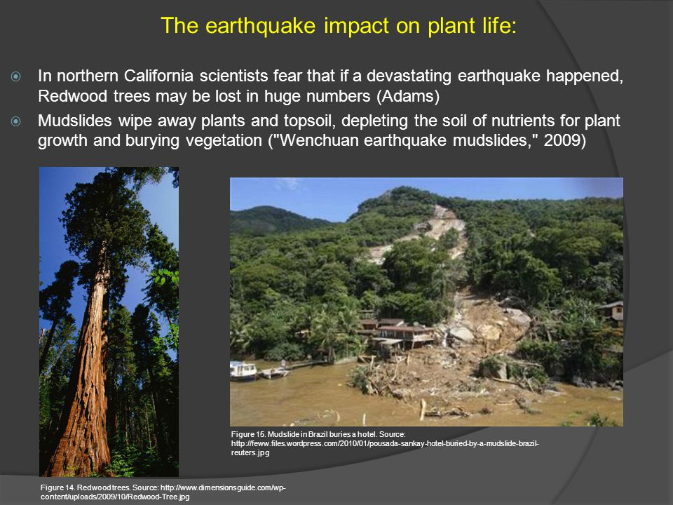 The earthquake impact on plant life: