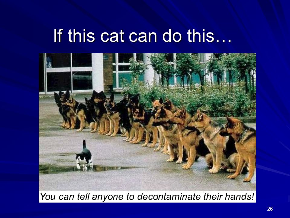 If this cat can do this… You can tell anyone to decontaminate their hands!