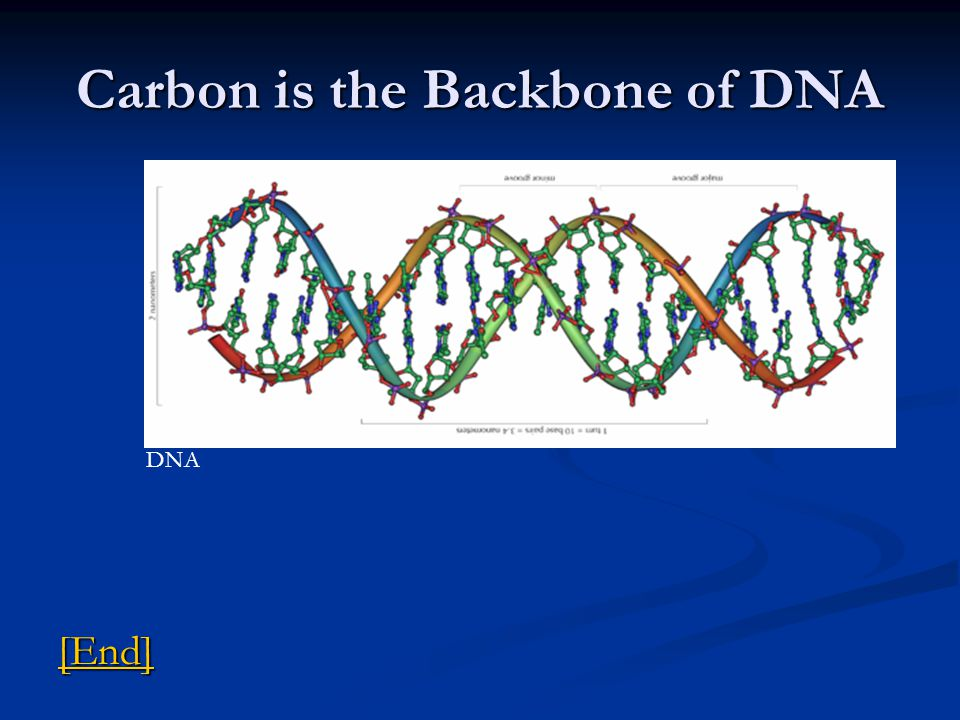 Carbon is the Backbone of DNA