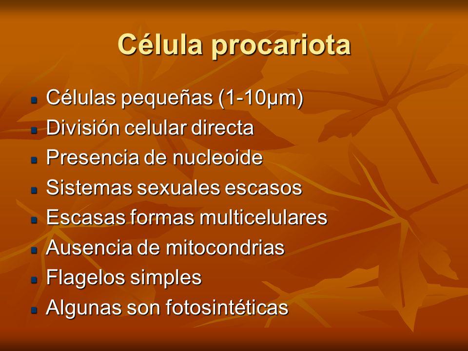 Célula procariota Células pequeñas (1-10µm) División celular directa