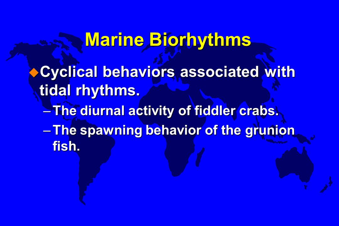 Marine Biorhythms Cyclical behaviors associated with tidal rhythms.