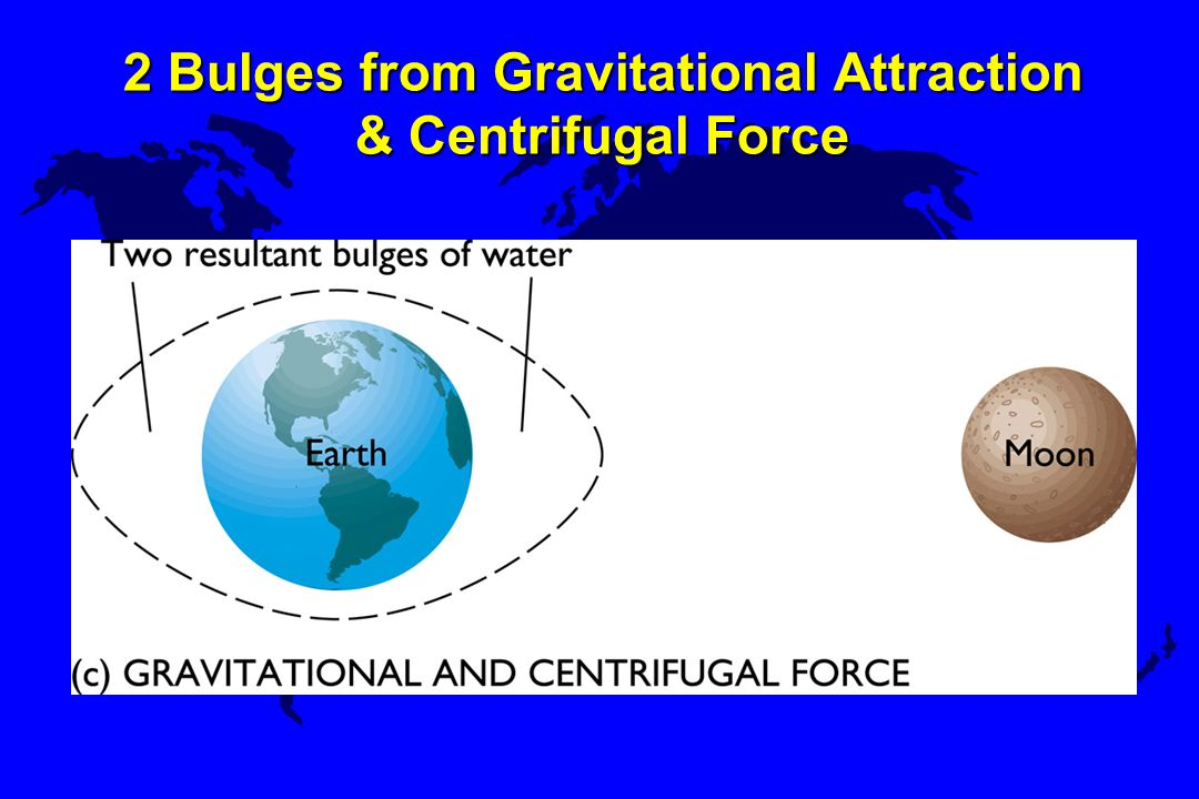 2 Bulges from Gravitational Attraction & Centrifugal Force