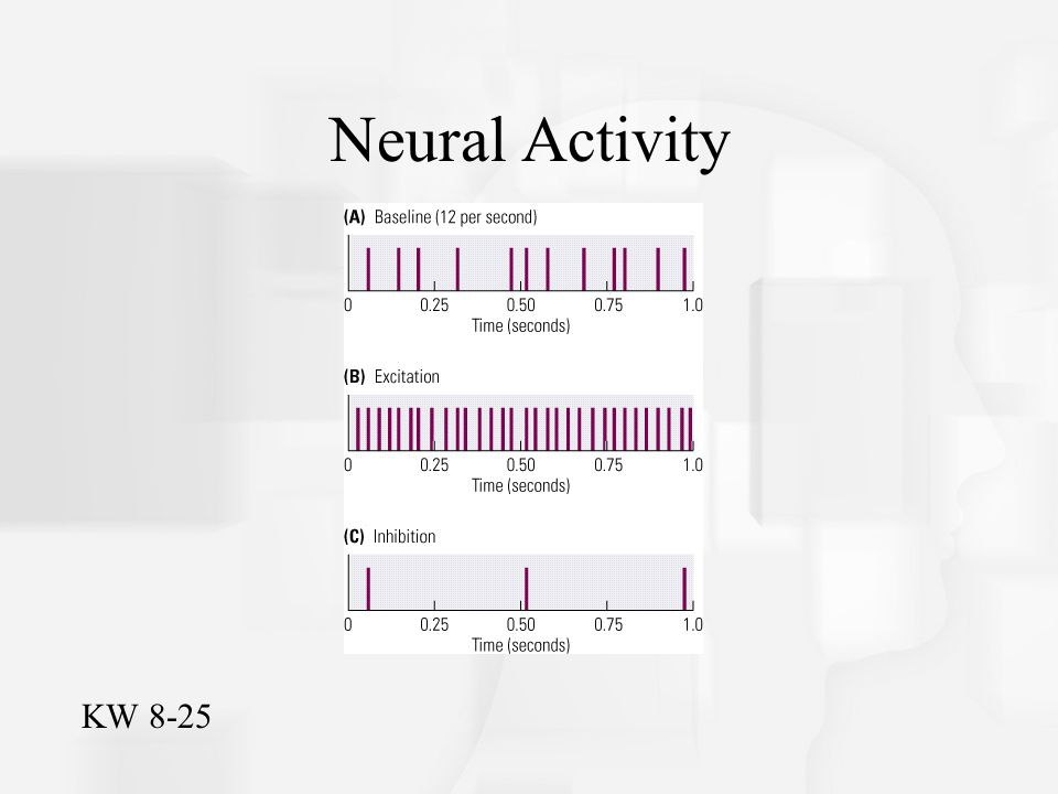 Neural Activity KW 8-25