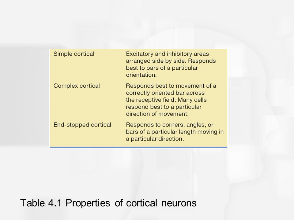 Table 4.1 Properties of cortical neurons