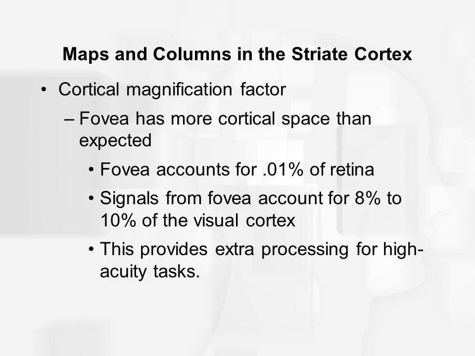 Maps and Columns in the Striate Cortex