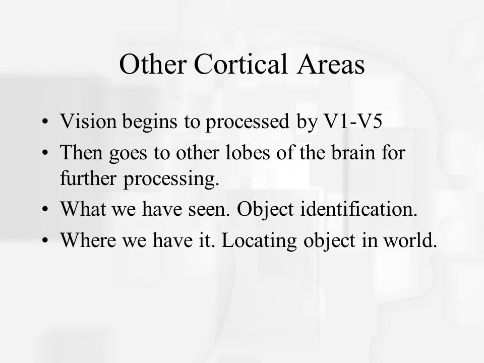 Other Cortical Areas Vision begins to processed by V1-V5