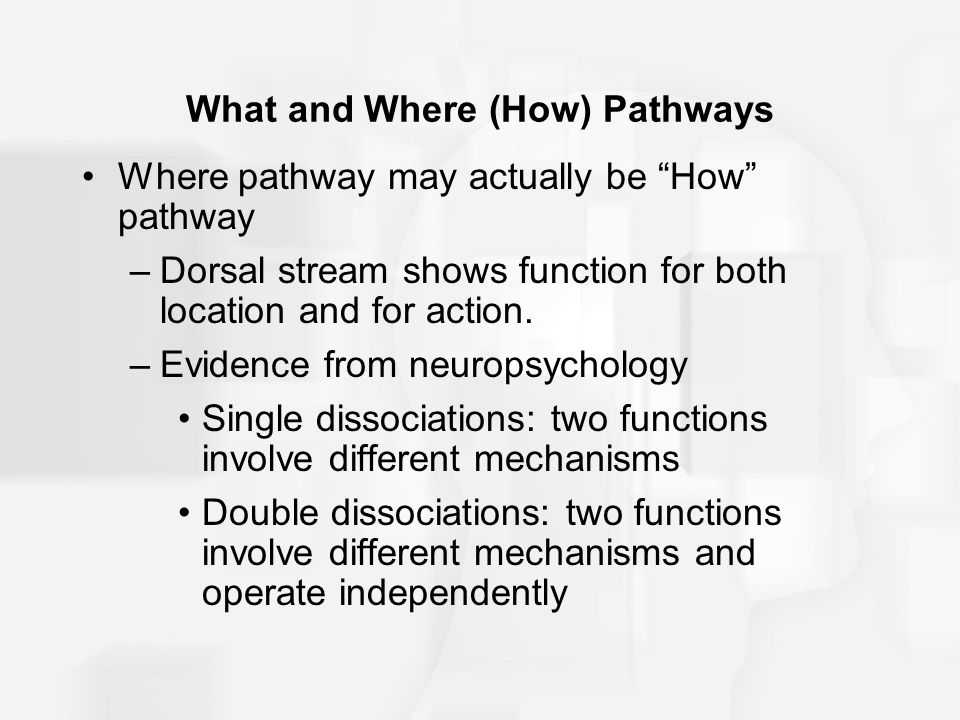 What and Where (How) Pathways