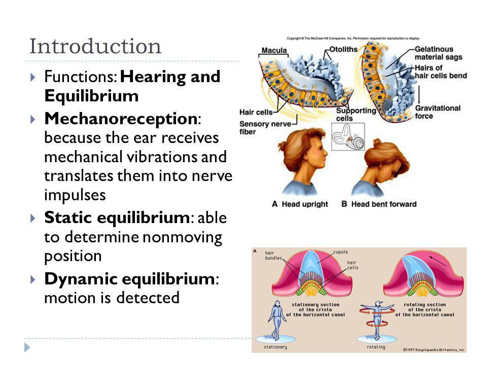 Introduction Functions: Hearing and Equilibrium