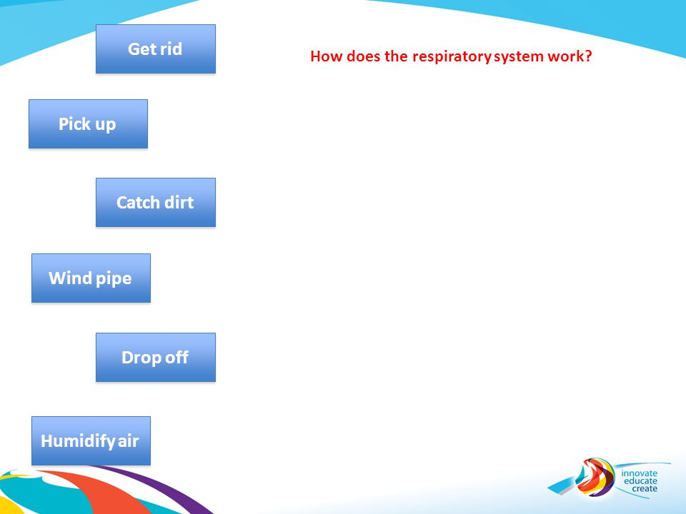 How does the respiratory system work