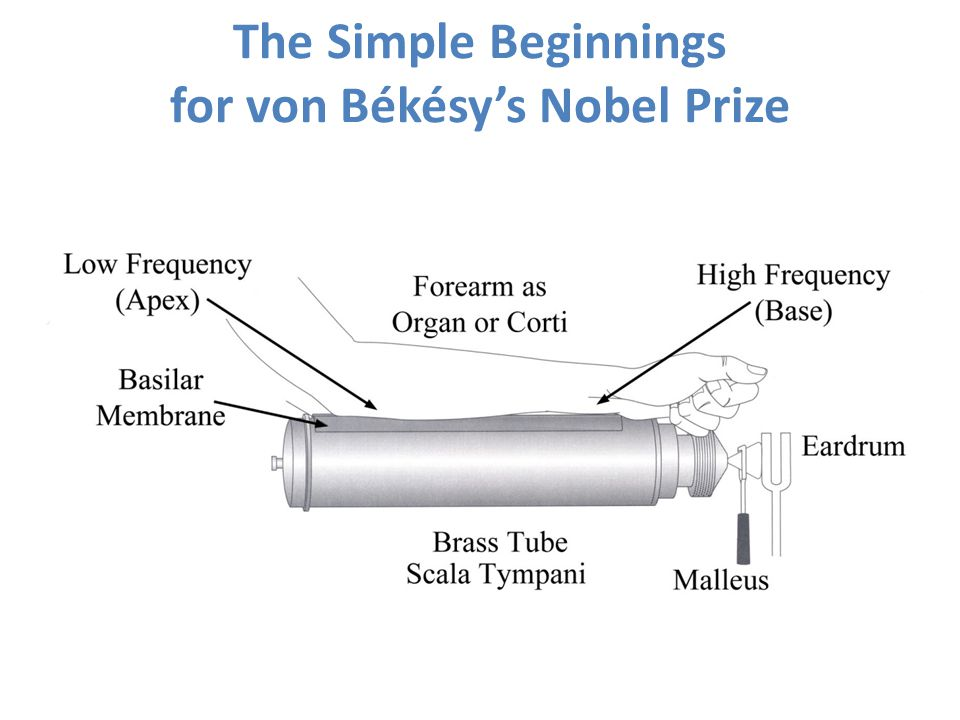 The Simple Beginnings for von Békésy's Nobel Prize