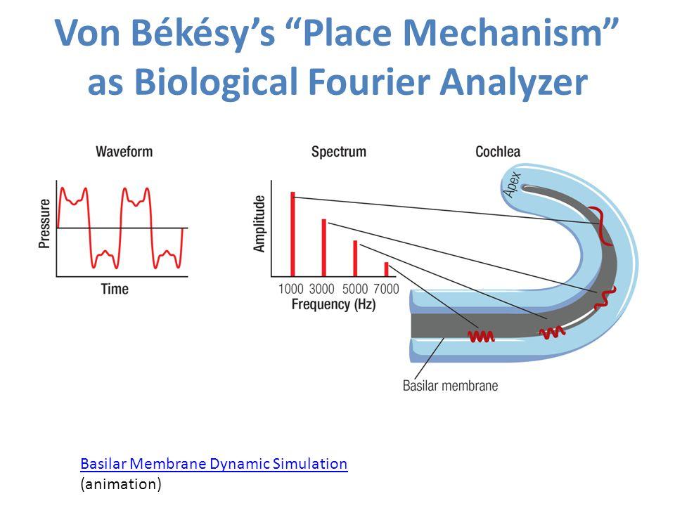 Von Békésy's Place Mechanism as Biological Fourier Analyzer