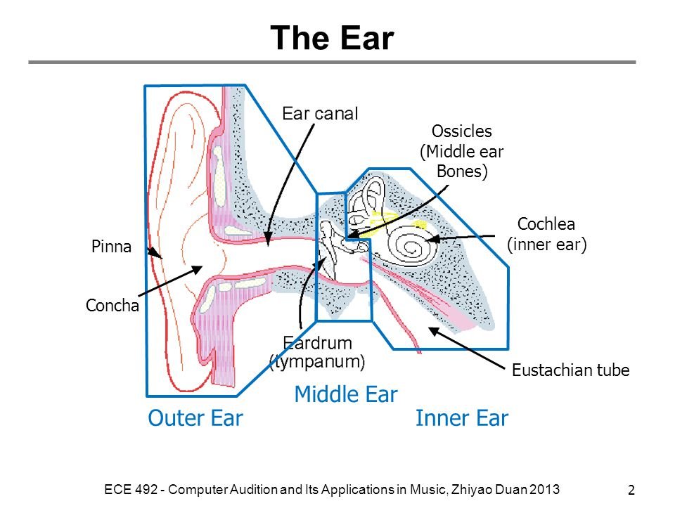 The Ear Outer Ear Middle Ear Inner Ear Ossicles (Middle ear Bones)