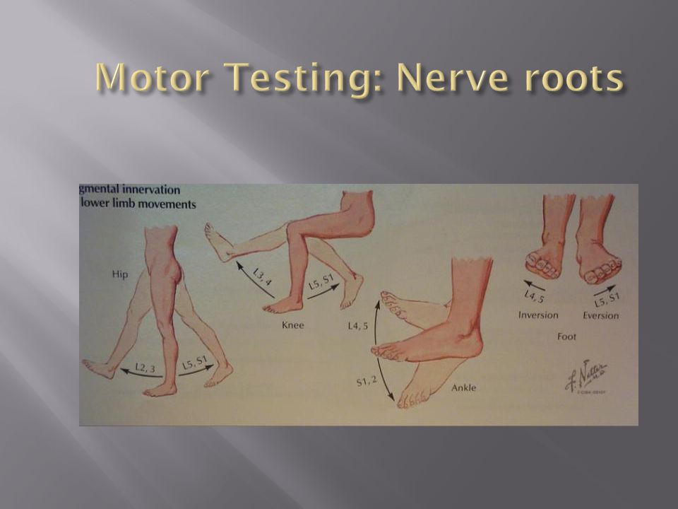 Motor Testing: Nerve roots