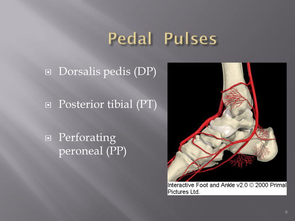 Pedal Pulses Dorsalis pedis (DP) Posterior tibial (PT)