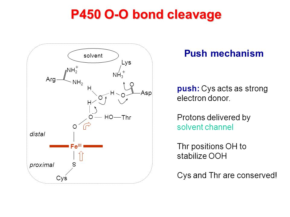 P450 O-O bond cleavage Push mechanism