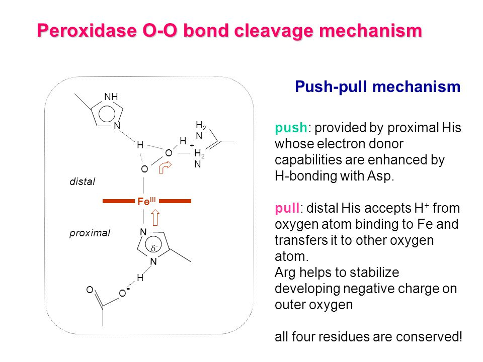 Peroxidase O-O bond cleavage mechanism