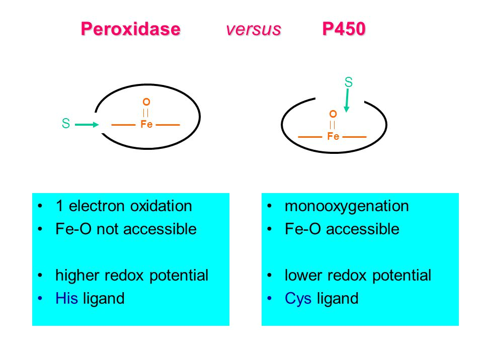 Peroxidase versus P450 1 electron oxidation Fe-O not accessible