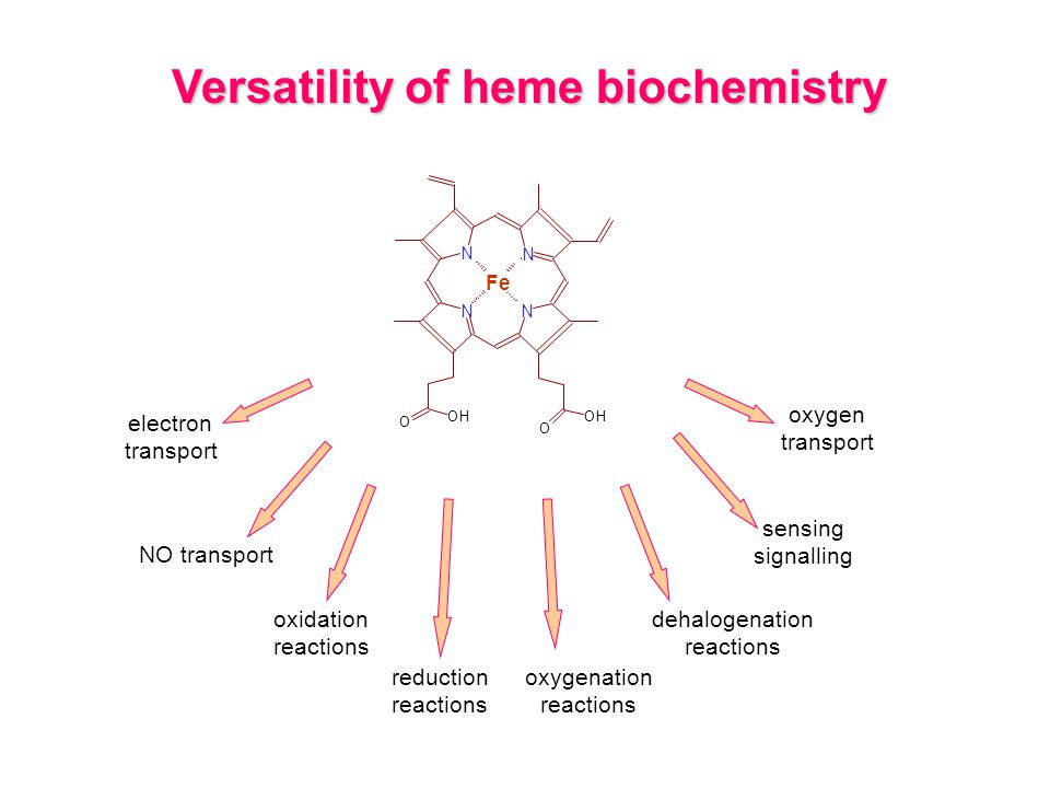 Versatility of heme biochemistry