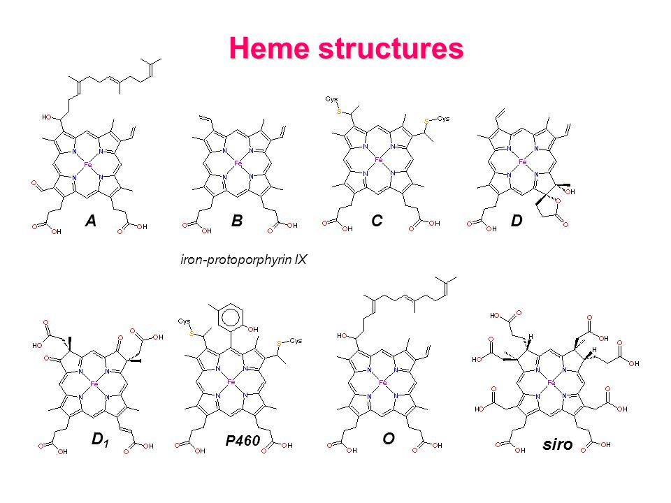 Heme structures A B C D iron-protoporphyrin IX D1 P460 O siro