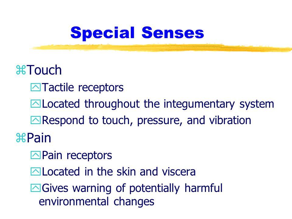 Special Senses Touch Pain Tactile receptors