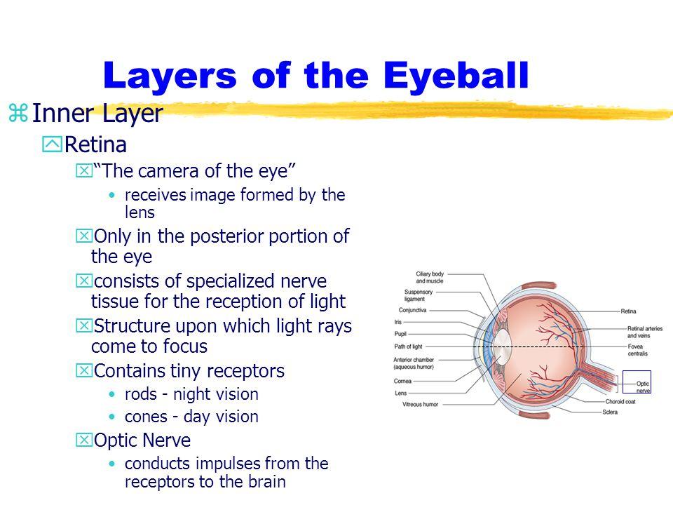 Layers of the Eyeball Inner Layer Retina The camera of the eye