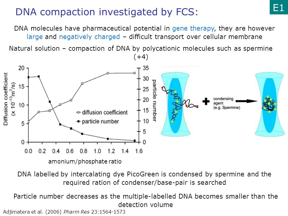 DNA compaction investigated by FCS: