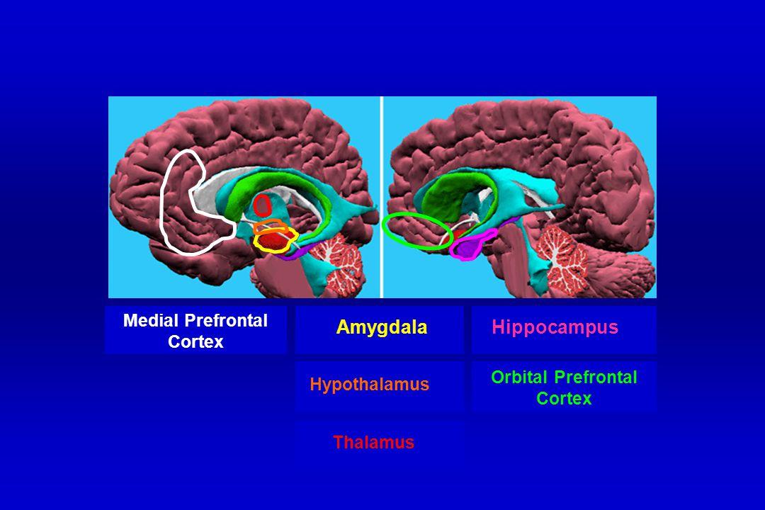 Amygdala Hippocampus Medial Prefrontal Cortex Hypothalamus