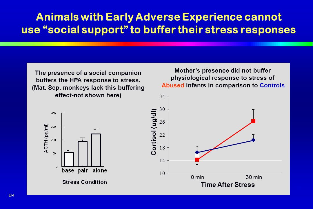 Animals with Early Adverse Experience cannot use social support to buffer their stress responses