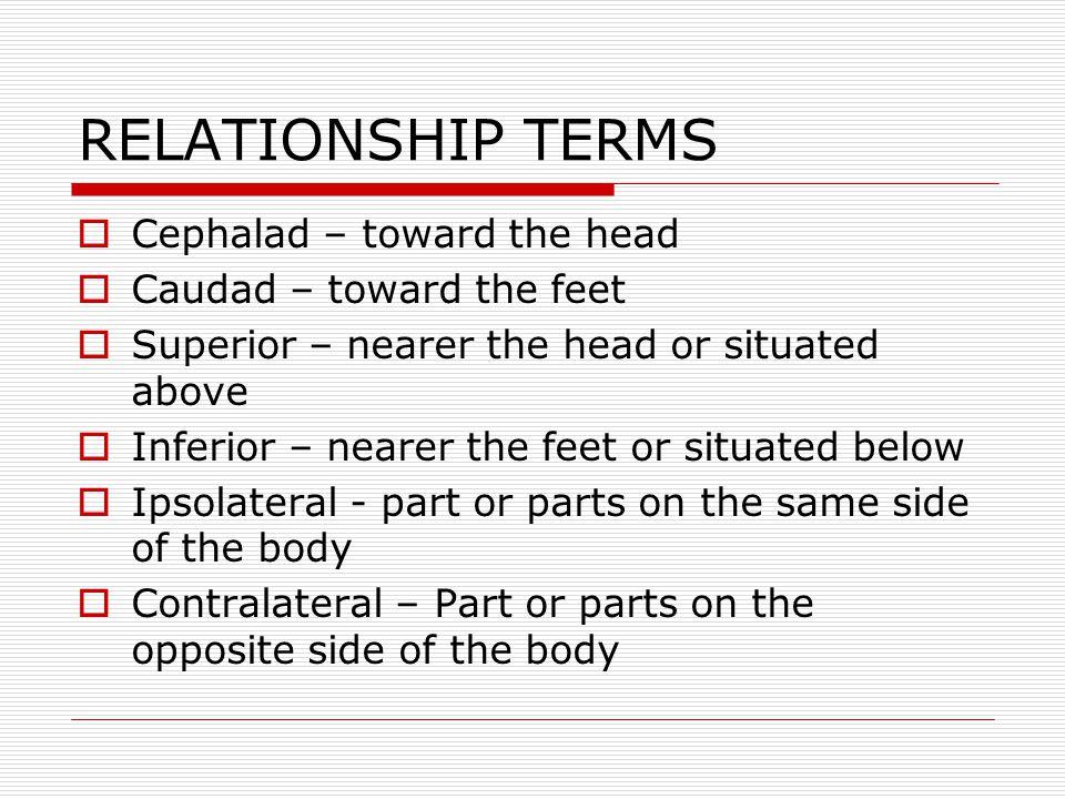 RELATIONSHIP TERMS Cephalad – toward the head Caudad – toward the feet