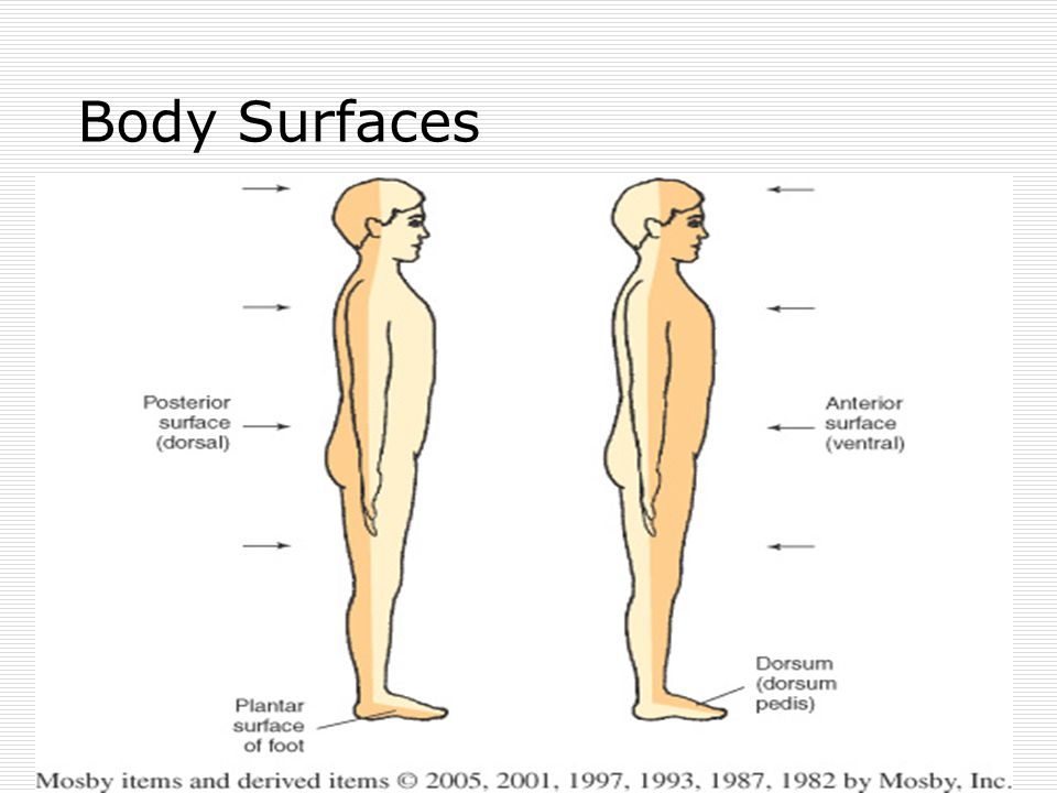Body Surfaces