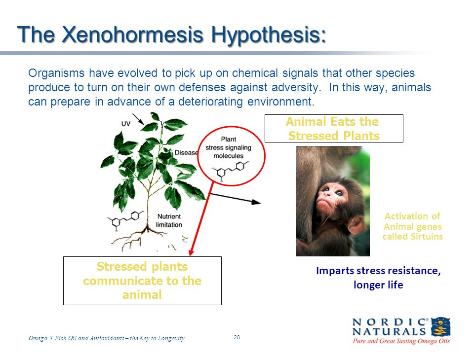 The Xenohormesis Hypothesis: