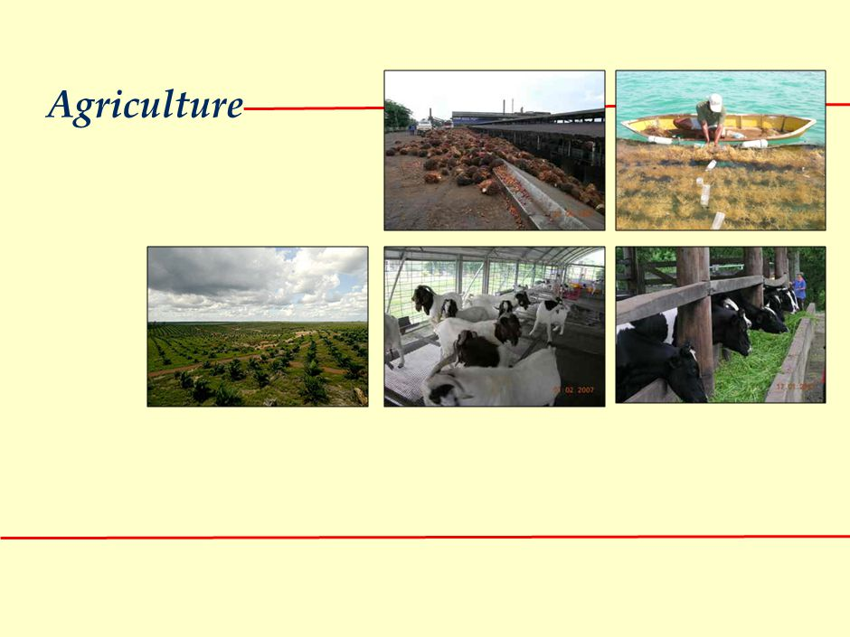 AGRICULTURE: Focus on food sustainability, high value export to North Asia and poverty eradication