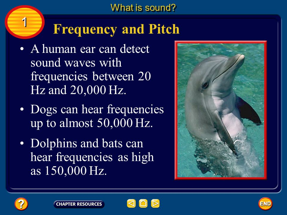 What is sound 1. Frequency and Pitch. A human ear can detect sound waves with frequencies between 20 Hz and 20,000 Hz.